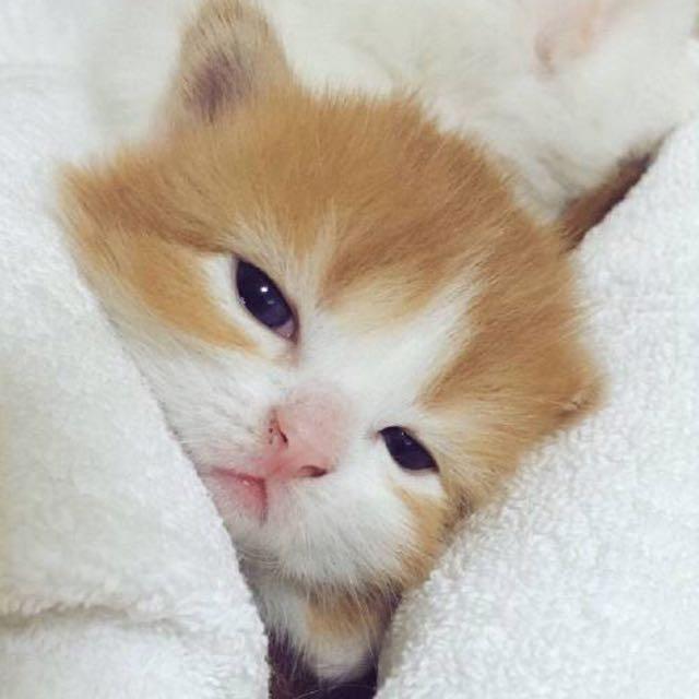 可爱的聊天猫咪图
