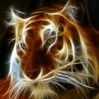 泰戈Tiger