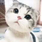东辰-一只猫