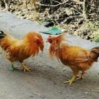 王者5的菜鸡