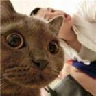 爱拍-猫爷