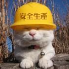 民工猫坚强