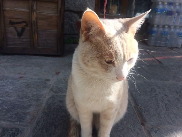 壁纸 动物 狗 狗狗 猫 猫咪 小猫 桌面 638_478